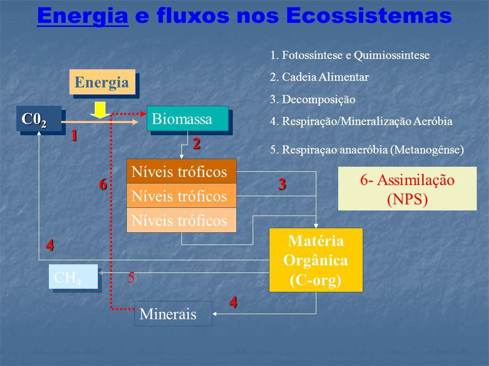 Energia e fluxos nos Ecossistemas Matéria Orgânica (C-org)