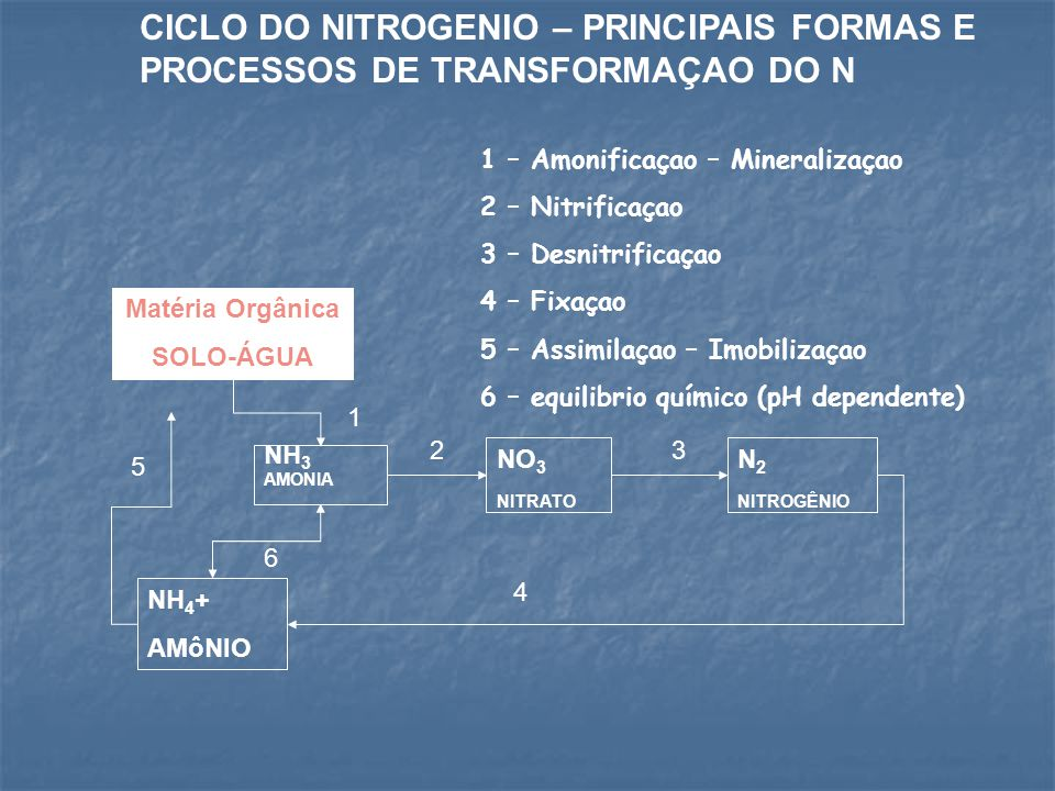 CICLO DO NITROGENIO – PRINCIPAIS FORMAS E PROCESSOS DE TRANSFORMAÇAO DO N