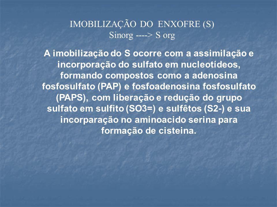IMOBILIZAÇÃO DO ENXOFRE (S)