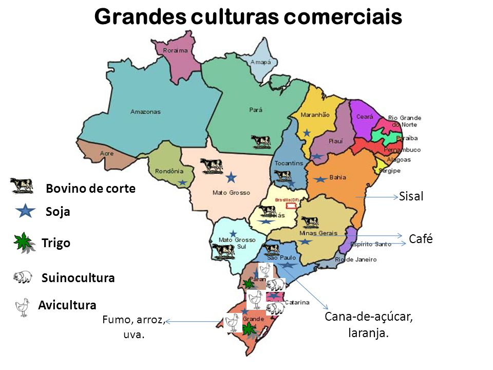 Grandes culturas comerciais