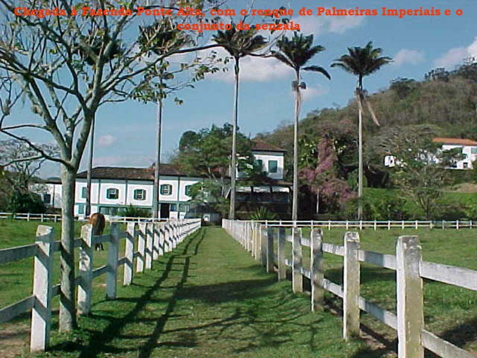 Chegada à Fazenda Ponte Alta, com o renque de Palmeiras Imperiais e o conjunto da senzala