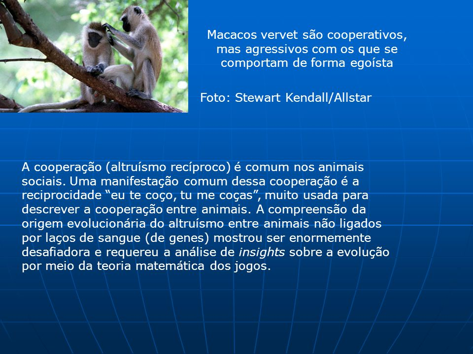 Macacos vervet são cooperativos,