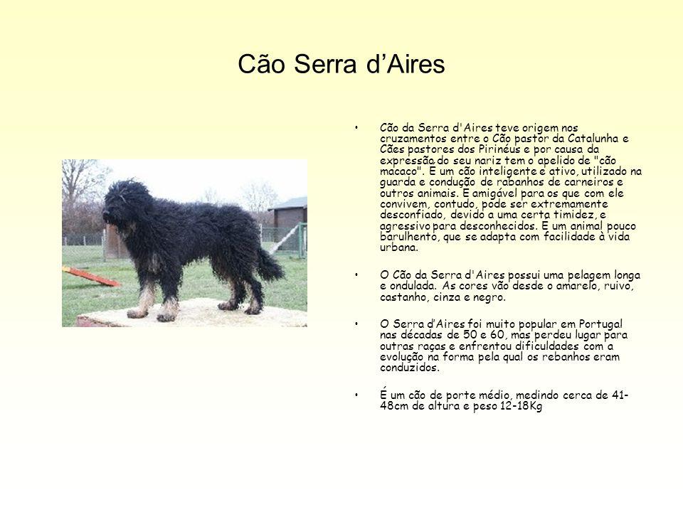 Cão Serra d'Aires