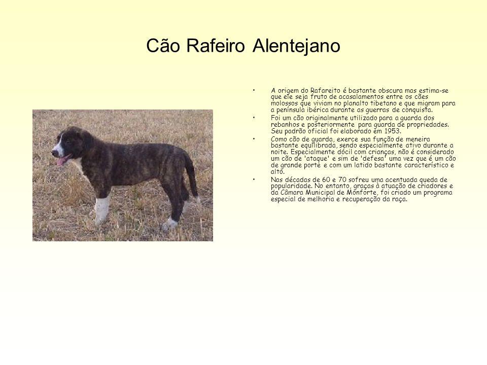 Cão Rafeiro Alentejano