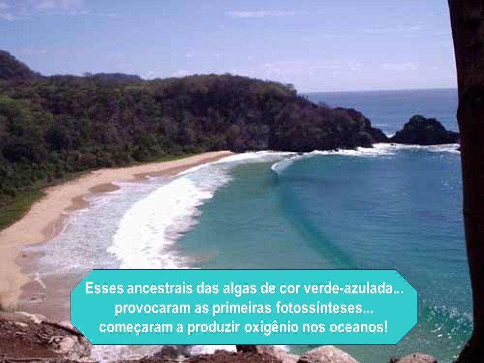Esses ancestrais das algas de cor verde-azulada...