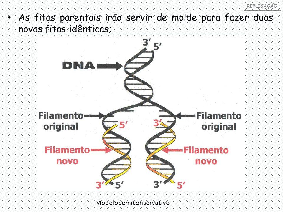 REPLICAÇÃO As fitas parentais irão servir de molde para fazer duas novas fitas idênticas; Modelo semiconservativo.