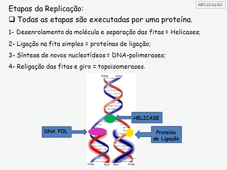 Todas as etapas são executadas por uma proteína.