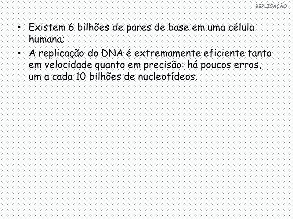 Existem 6 bilhões de pares de base em uma célula humana;