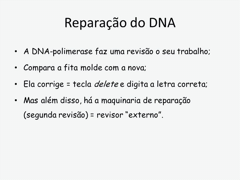 Reparação do DNA A DNA-polimerase faz uma revisão o seu trabalho;