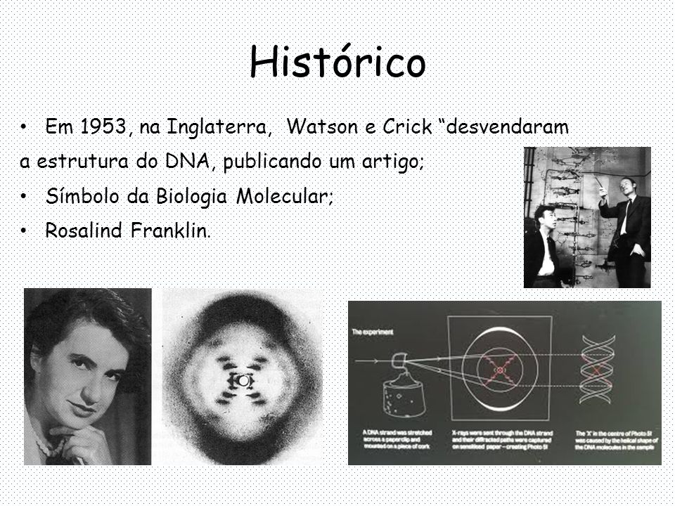 Histórico Em 1953, na Inglaterra, Watson e Crick desvendaram