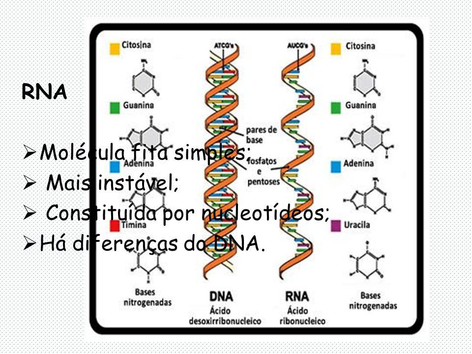 RNA Molécula fita simples; Mais instável; Constituída por nucleotídeos; Há diferenças do DNA.