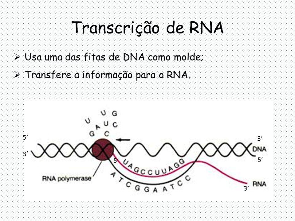 Transcrição de RNA Usa uma das fitas de DNA como molde;