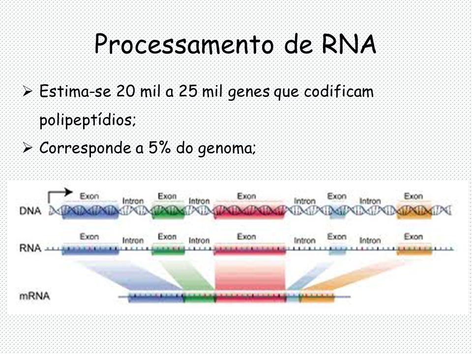 Processamento de RNA Estima-se 20 mil a 25 mil genes que codificam polipeptídios; Corresponde a 5% do genoma;