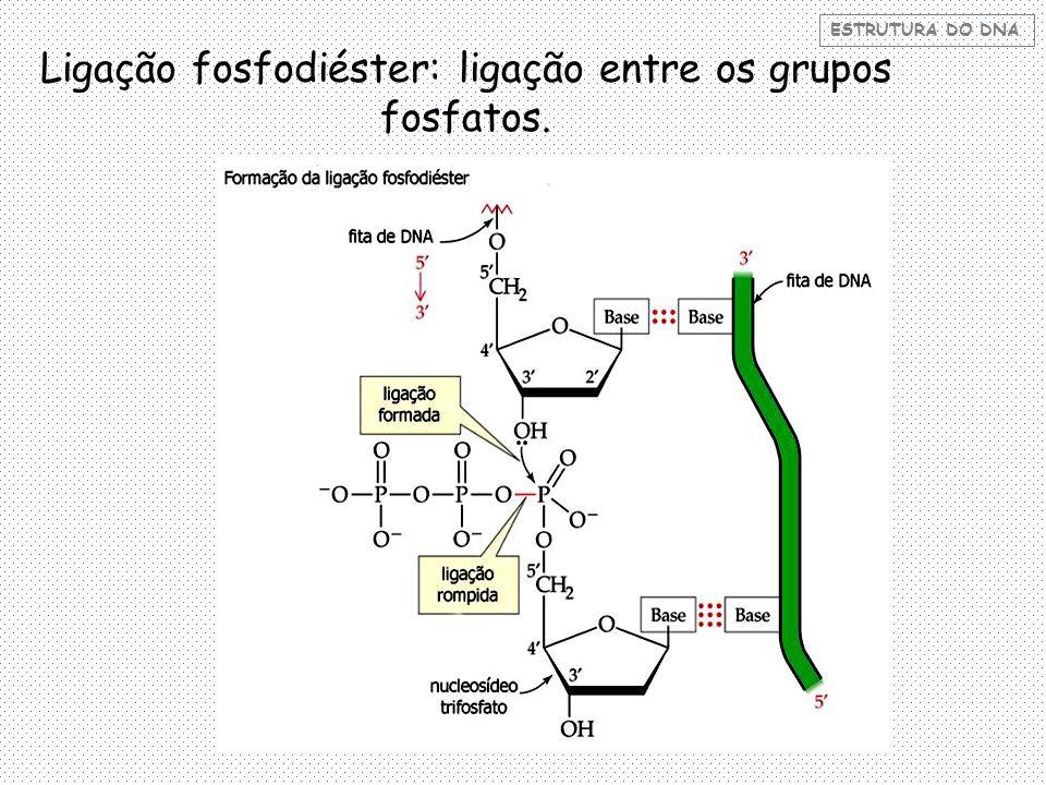 Ligação fosfodiéster: ligação entre os grupos fosfatos.
