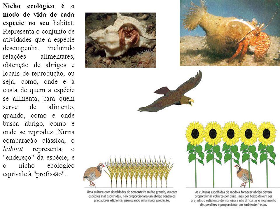 Nicho ecológico é o modo de vida de cada espécie no seu habitat