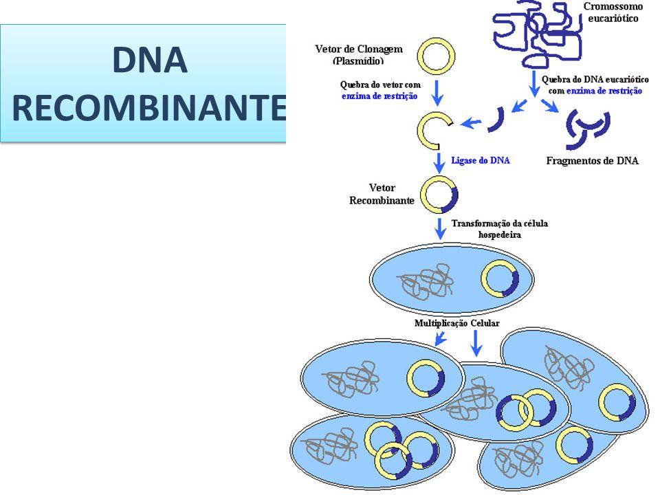 DNA RECOMBINANTE
