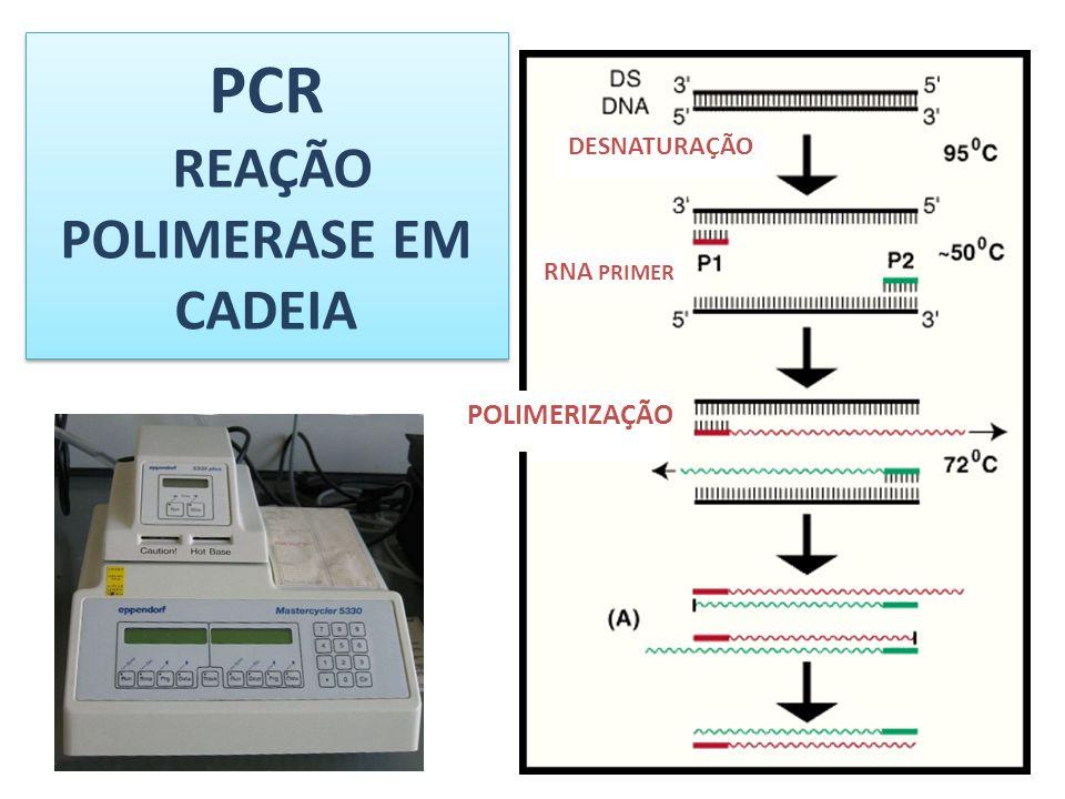 PCR REAÇÃO POLIMERASE EM CADEIA
