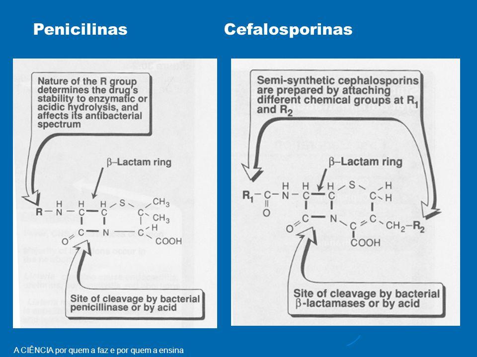 Penicilinas Cefalosporinas