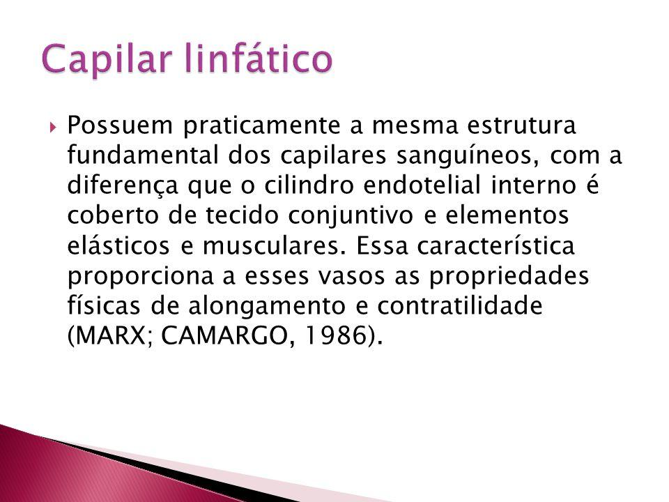 Capilar linfático