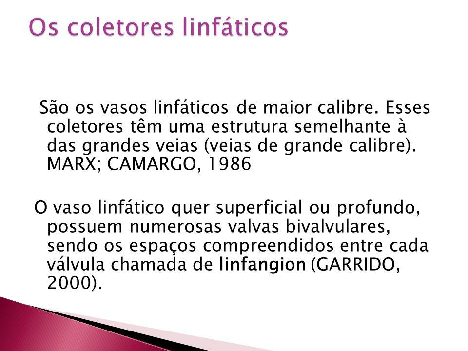 Os coletores linfáticos