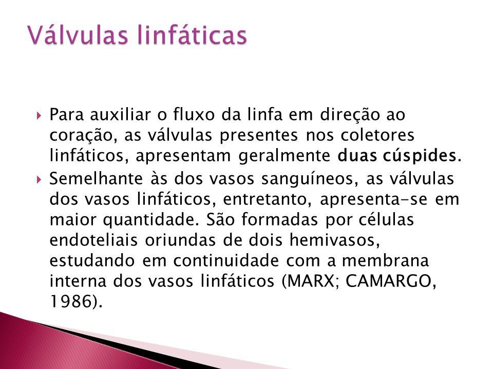 Válvulas linfáticas