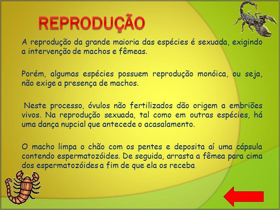 Reprodução A reprodução da grande maioria das espécies é sexuada, exigindo a intervenção de machos e fêmeas.
