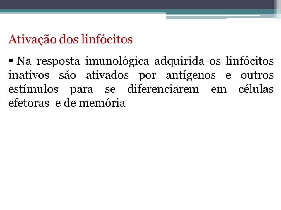 Ativação dos linfócitos