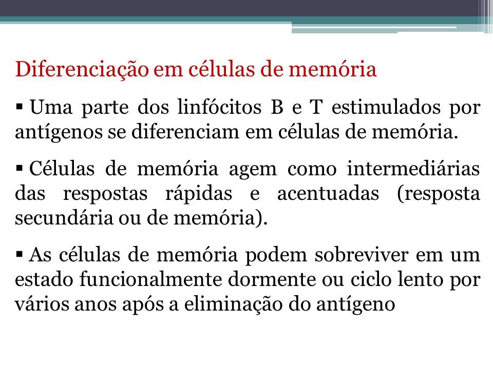 Diferenciação em células de memória