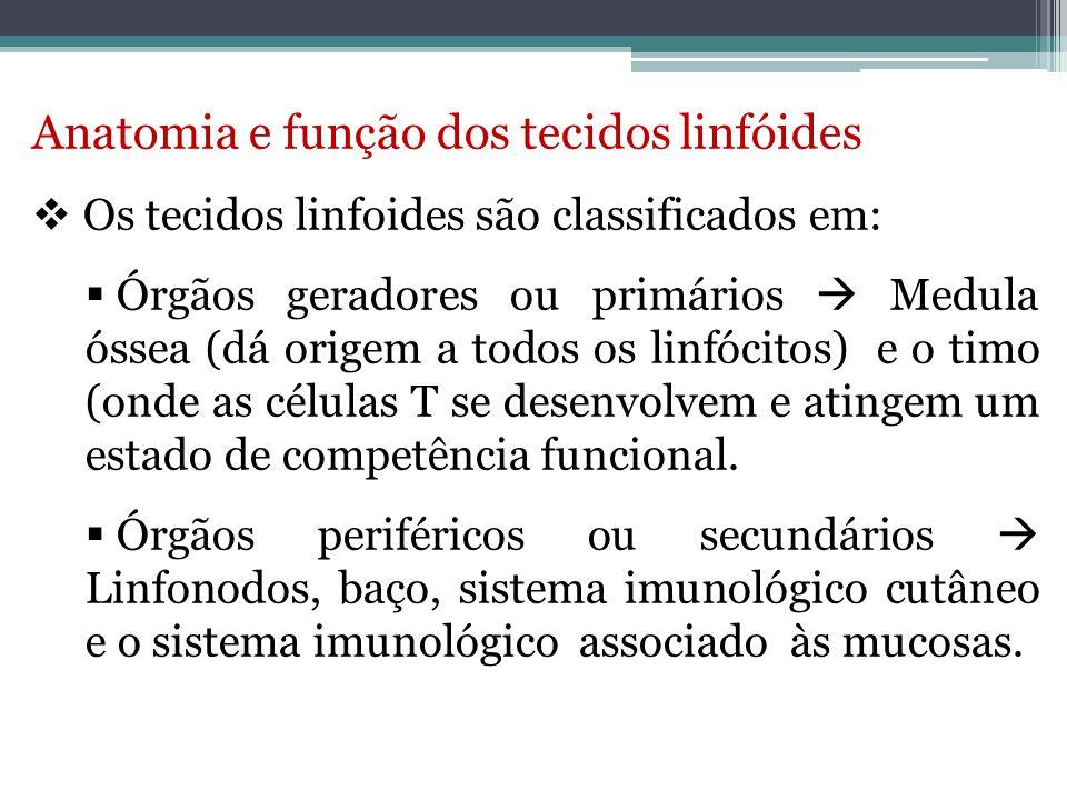 Anatomia e função dos tecidos linfóides
