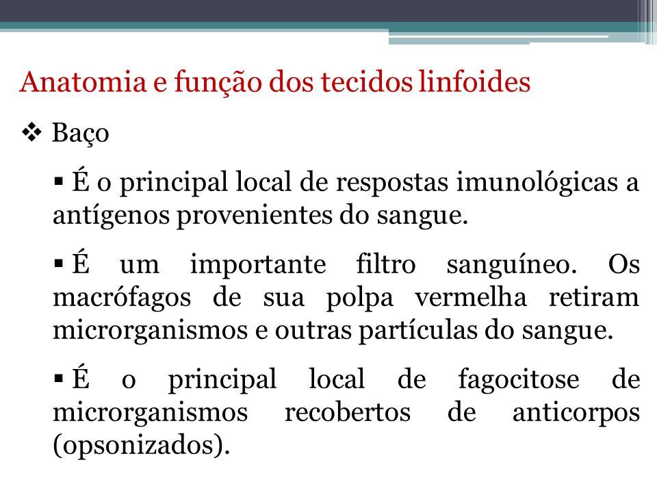 Anatomia e função dos tecidos linfoides
