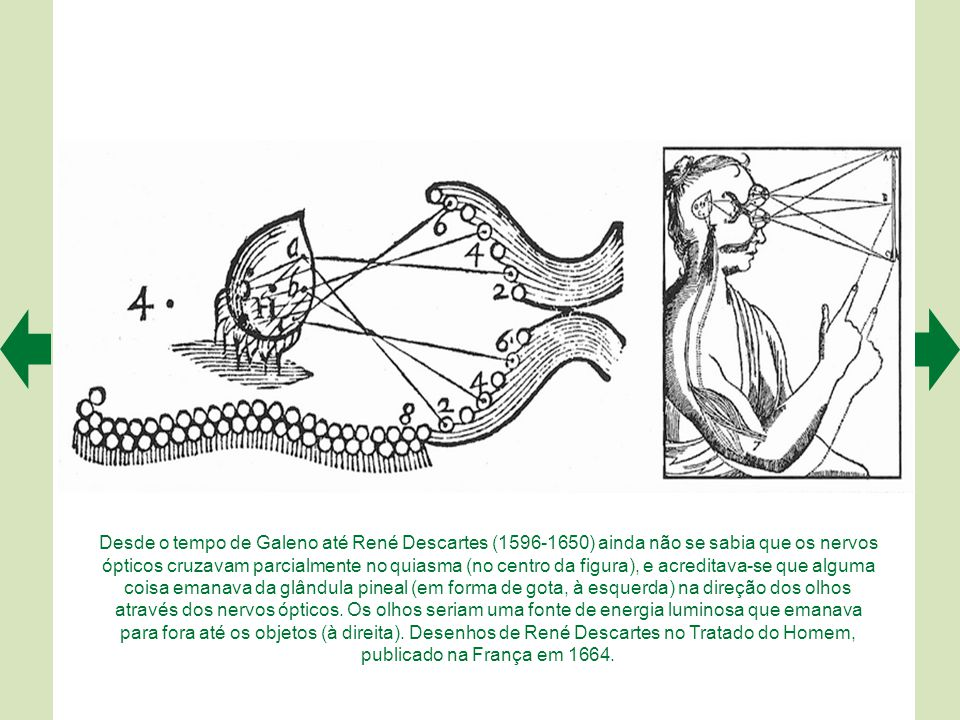 Desde o tempo de Galeno até René Descartes (1596-1650) ainda não se sabia que os nervos ópticos cruzavam parcialmente no quiasma (no centro da figura), e acreditava-se que alguma coisa emanava da glândula pineal (em forma de gota, à esquerda) na direção dos olhos