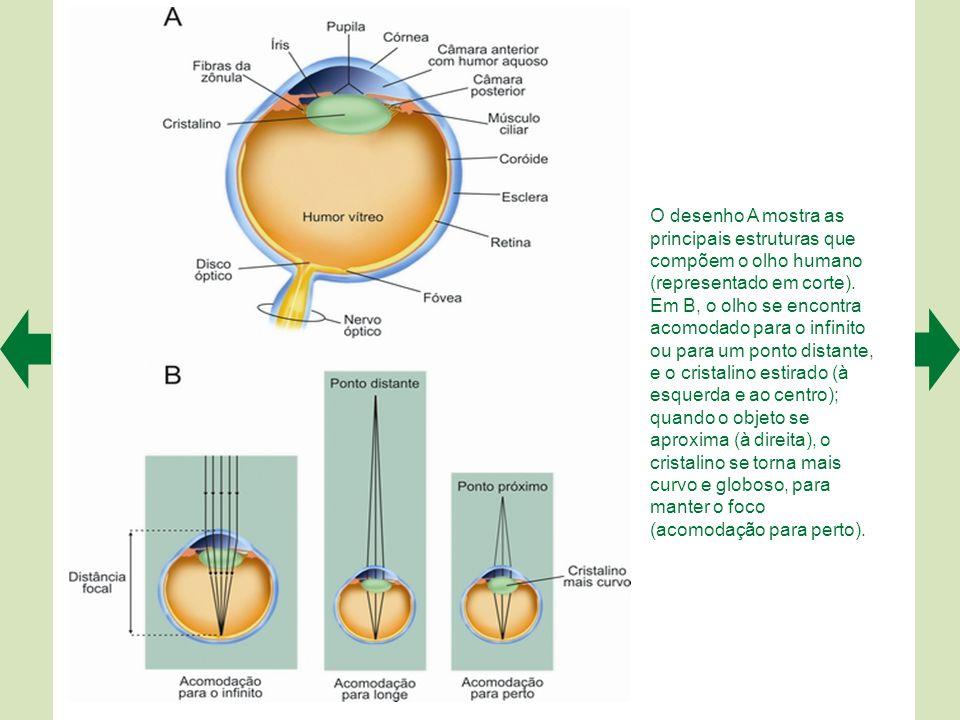 O desenho A mostra as principais estruturas que compõem o olho humano (representado em corte).