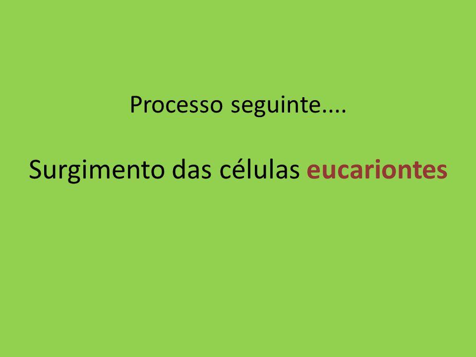 Processo seguinte.... Surgimento das células eucariontes