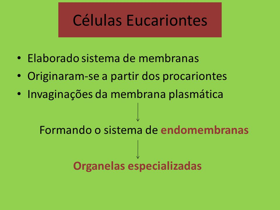 Células Eucariontes Elaborado sistema de membranas