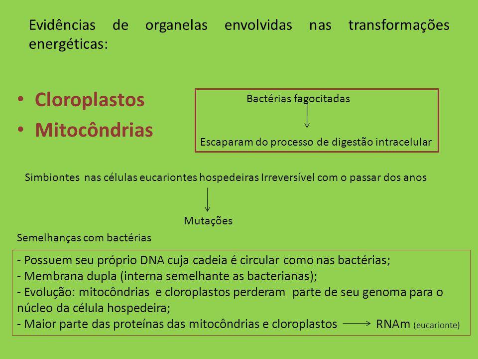 Evidências de organelas envolvidas nas transformações energéticas: