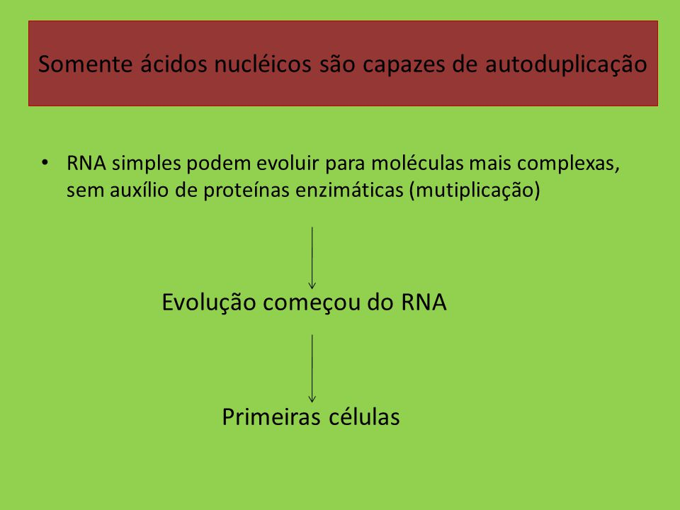 Somente ácidos nucléicos são capazes de autoduplicação