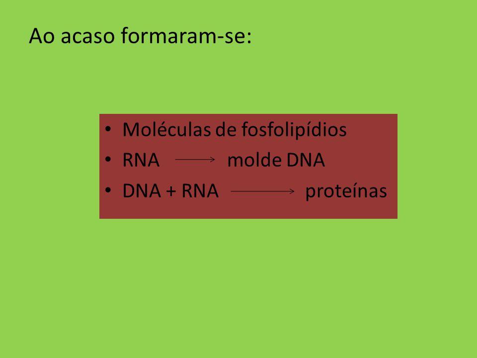 Ao acaso formaram-se: Moléculas de fosfolipídios RNA molde DNA