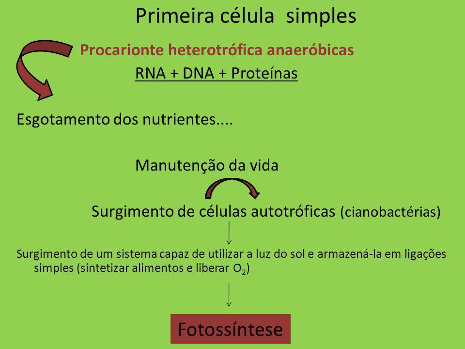 Primeira célula simples