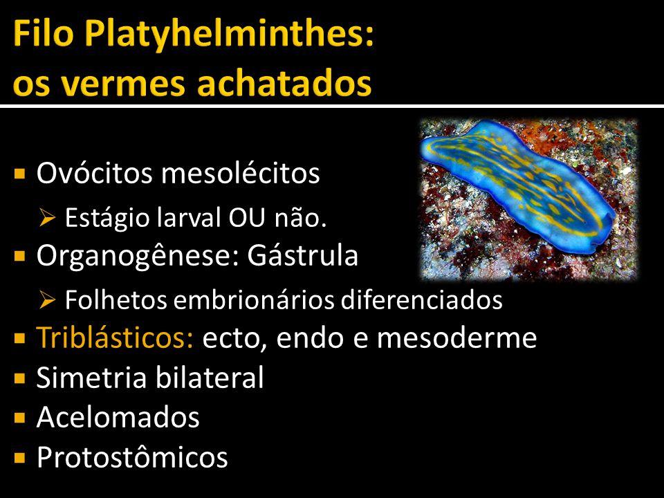 Filo Platyhelminthes: os vermes achatados