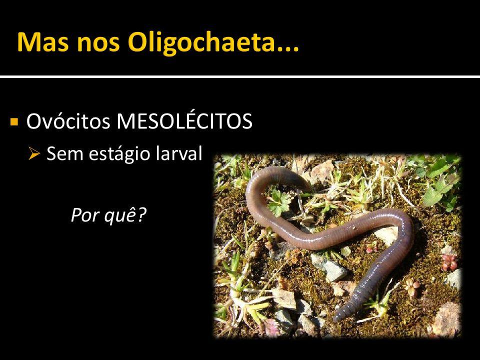 Mas nos Oligochaeta... Ovócitos MESOLÉCITOS Sem estágio larval