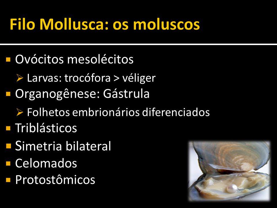 Filo Mollusca: os moluscos