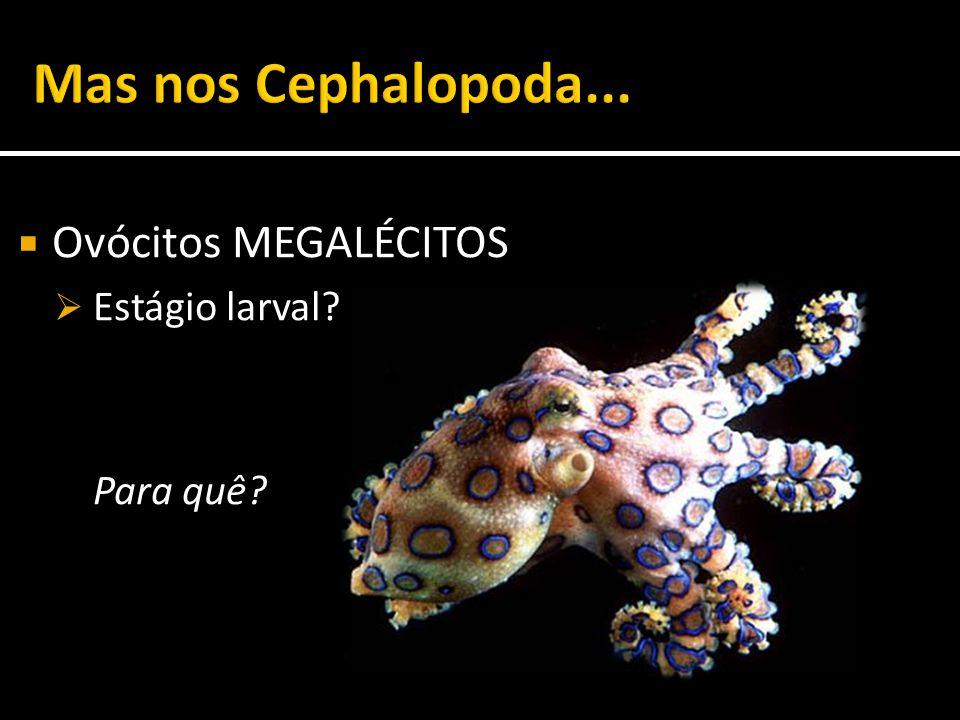 Mas nos Cephalopoda... Ovócitos MEGALÉCITOS Estágio larval Para quê