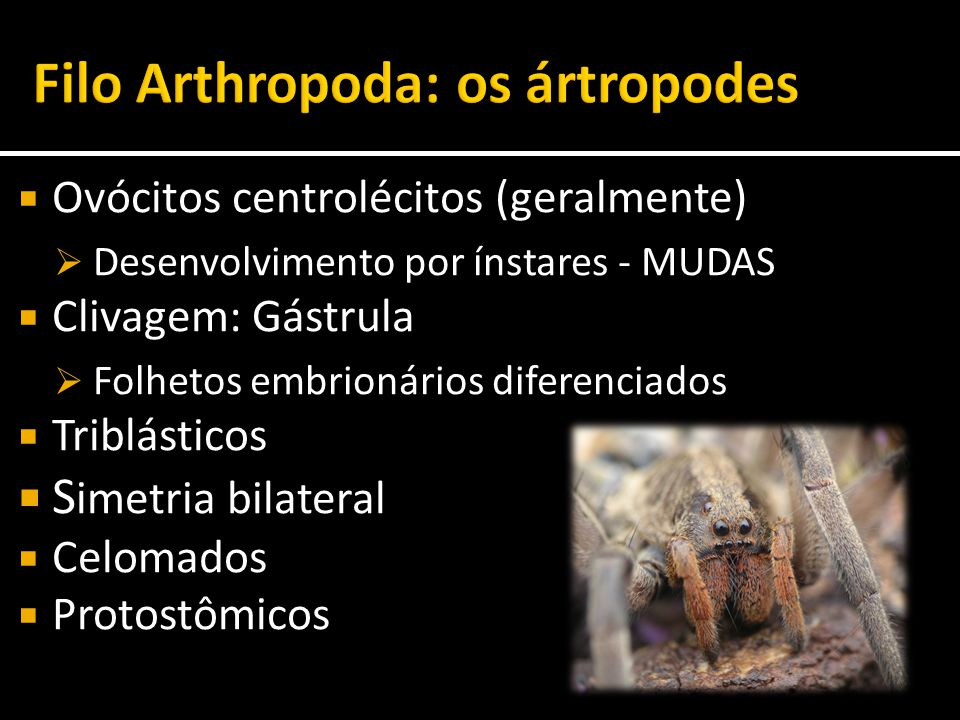 Filo Arthropoda: os ártropodes