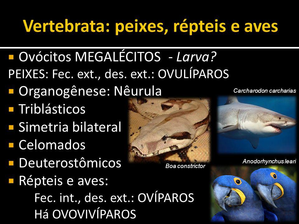Vertebrata: peixes, répteis e aves