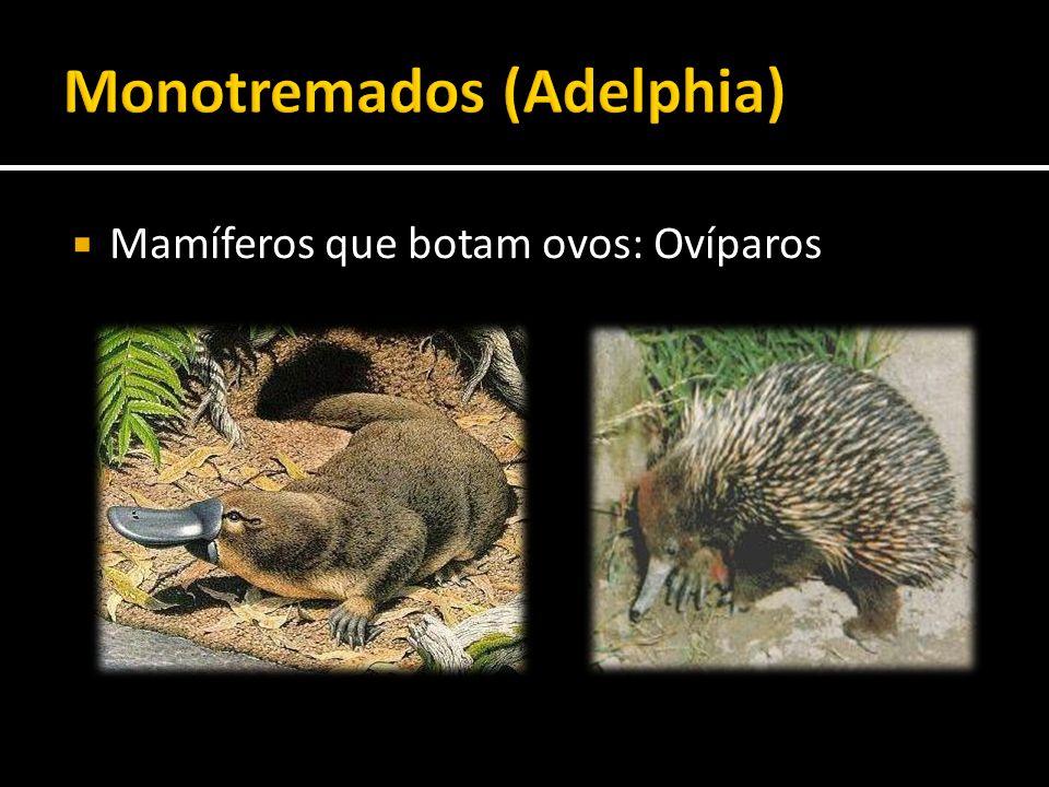 Monotremados (Adelphia)