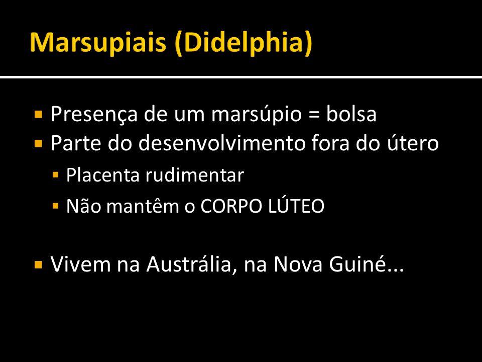 Marsupiais (Didelphia)