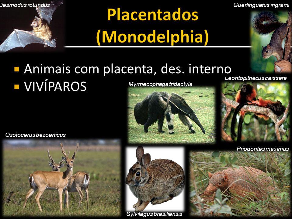Placentados (Monodelphia)