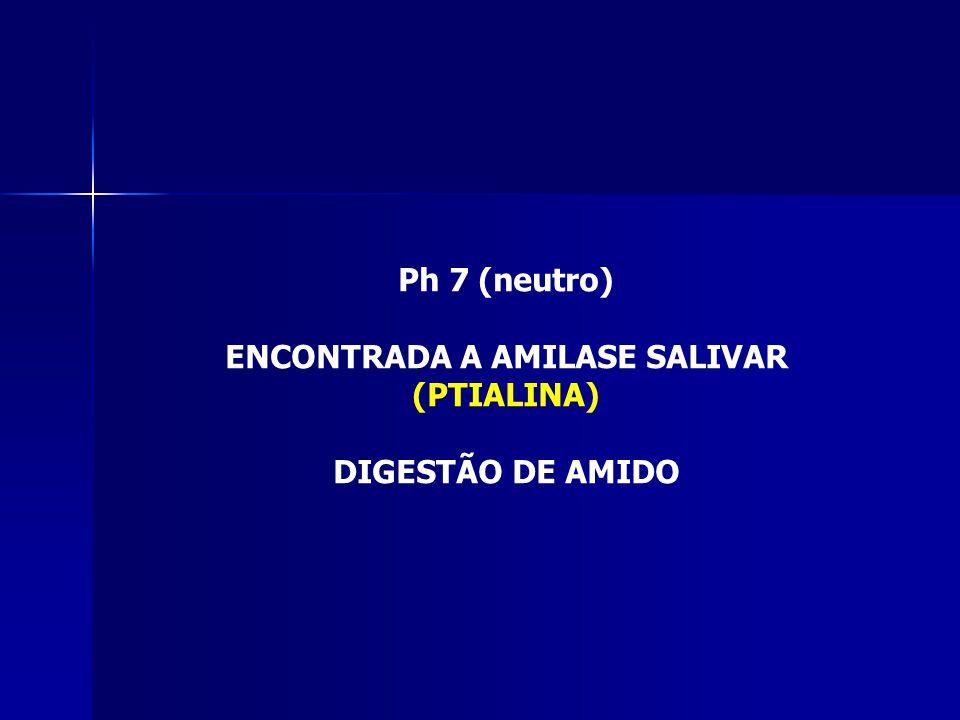 ENCONTRADA A AMILASE SALIVAR