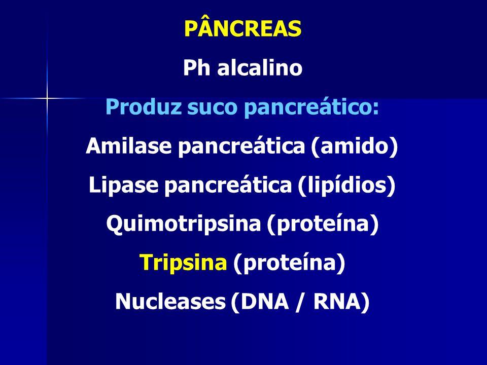 Produz suco pancreático: Amilase pancreática (amido)