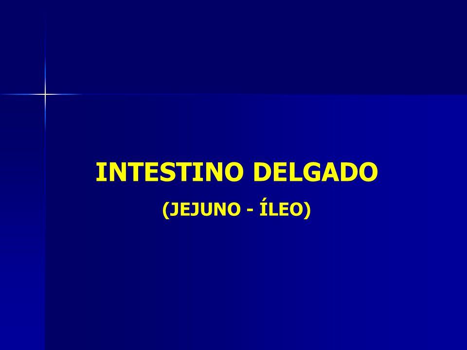 INTESTINO DELGADO (JEJUNO - ÍLEO)